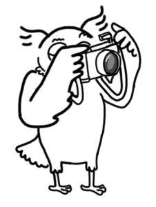 Sova fotografuje
