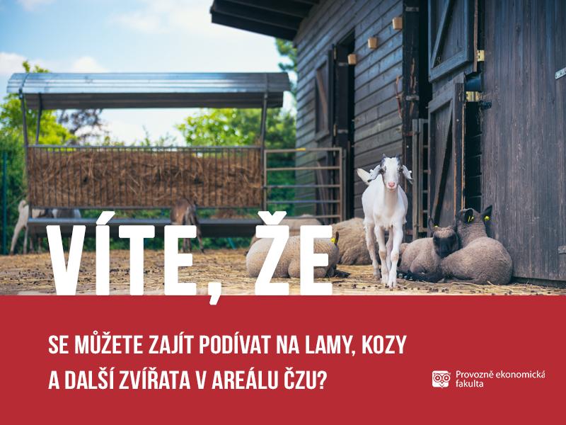 Zvířata v areálu ČZU