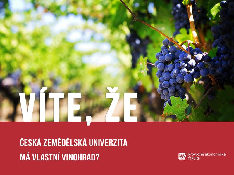 vinohrad ČZU, autor Patrik Hácha