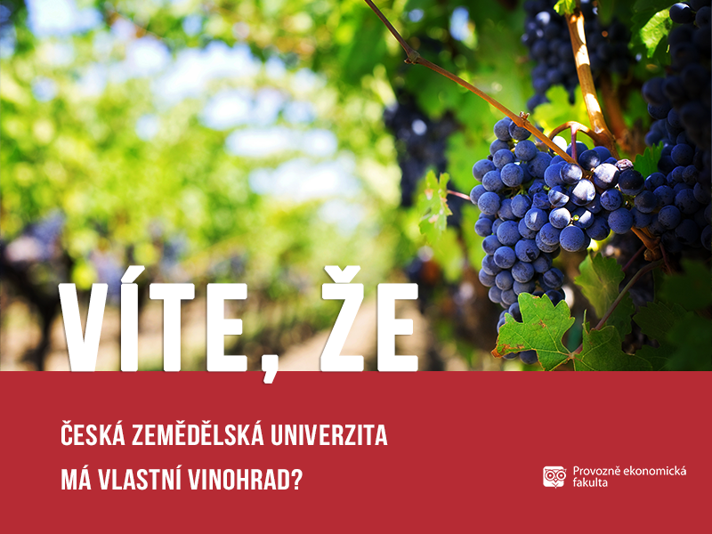Vinohrad ČZU