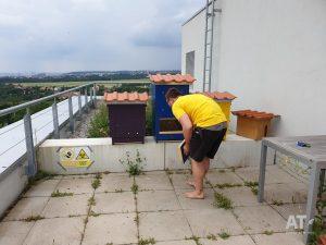 Včelí úly na střeše ČZU a Richard Hartman (FAPPZ)